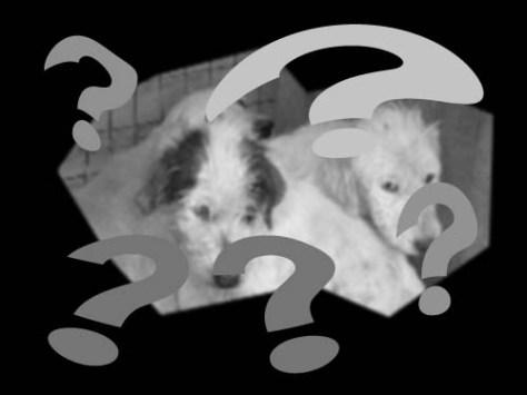 6 cani